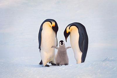 Забота о потомстве у животных реферат 6759