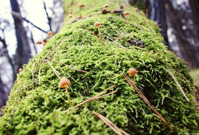 Гриб предупреждение грибы ягоды